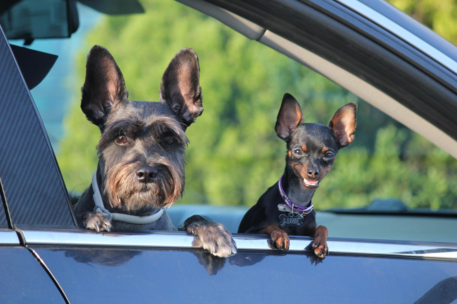 1 lipca świętujemy Dzień Psa  - Zdjęcie główne