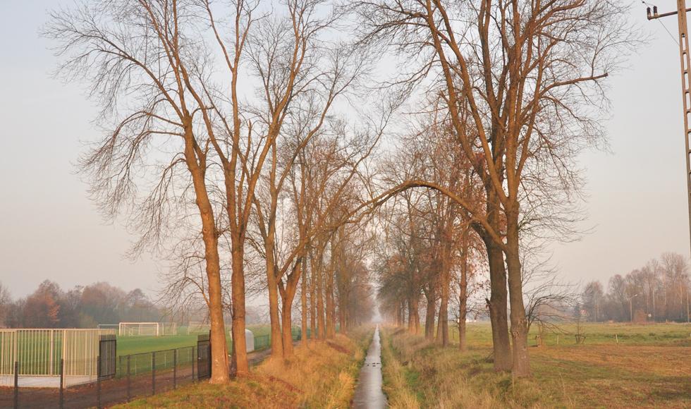 Kolejne 38 drzew zniknie z terenu miasta. Do połowy grudnia 27 drzew rosnących przy stadionie w Kolbuszowej Dolnej zostanie ściętych - Zdjęcie główne