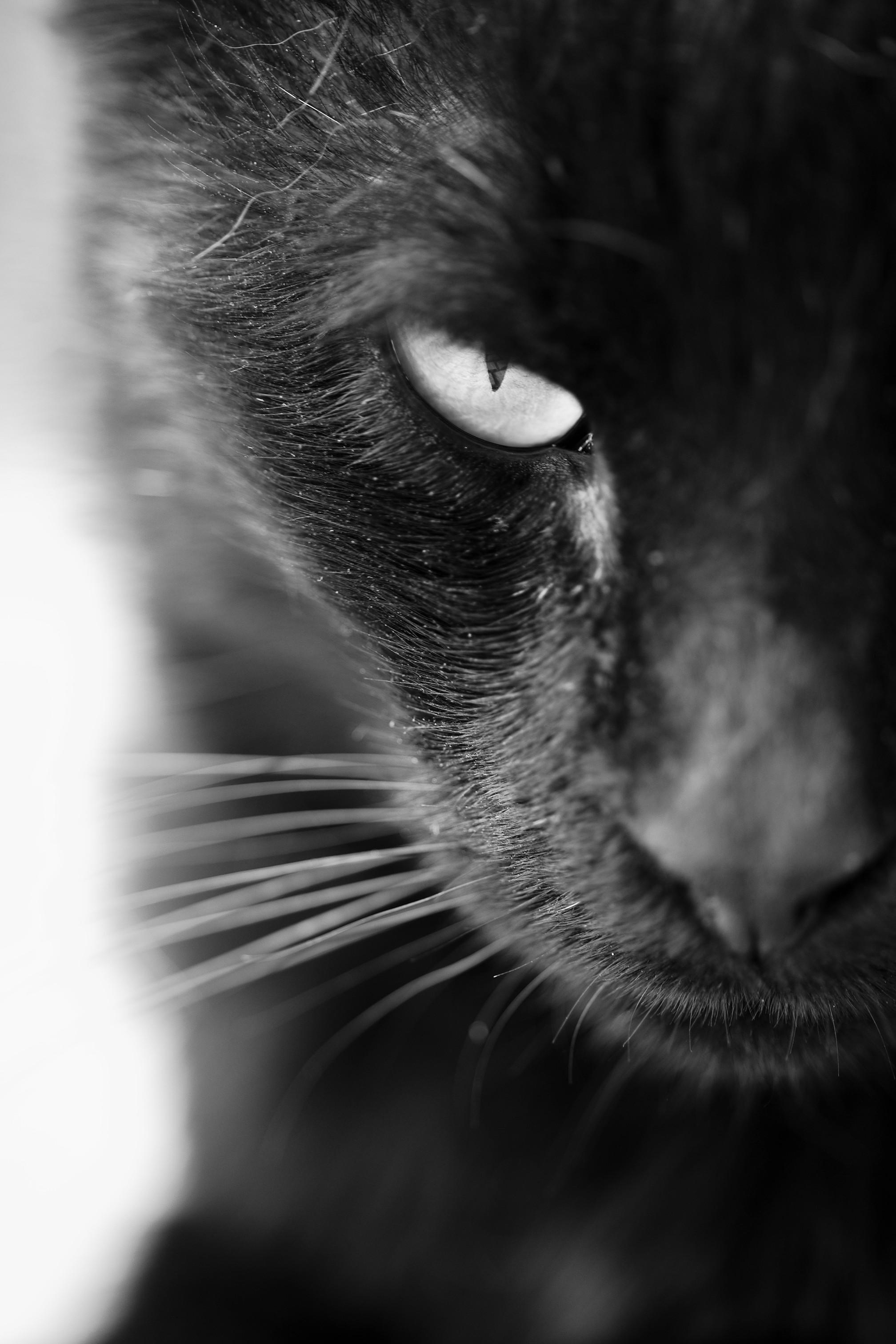 Czarny kot z czerwoną wstążką, piątek trzynastego czyli co z tymi przesądami? - Zdjęcie główne