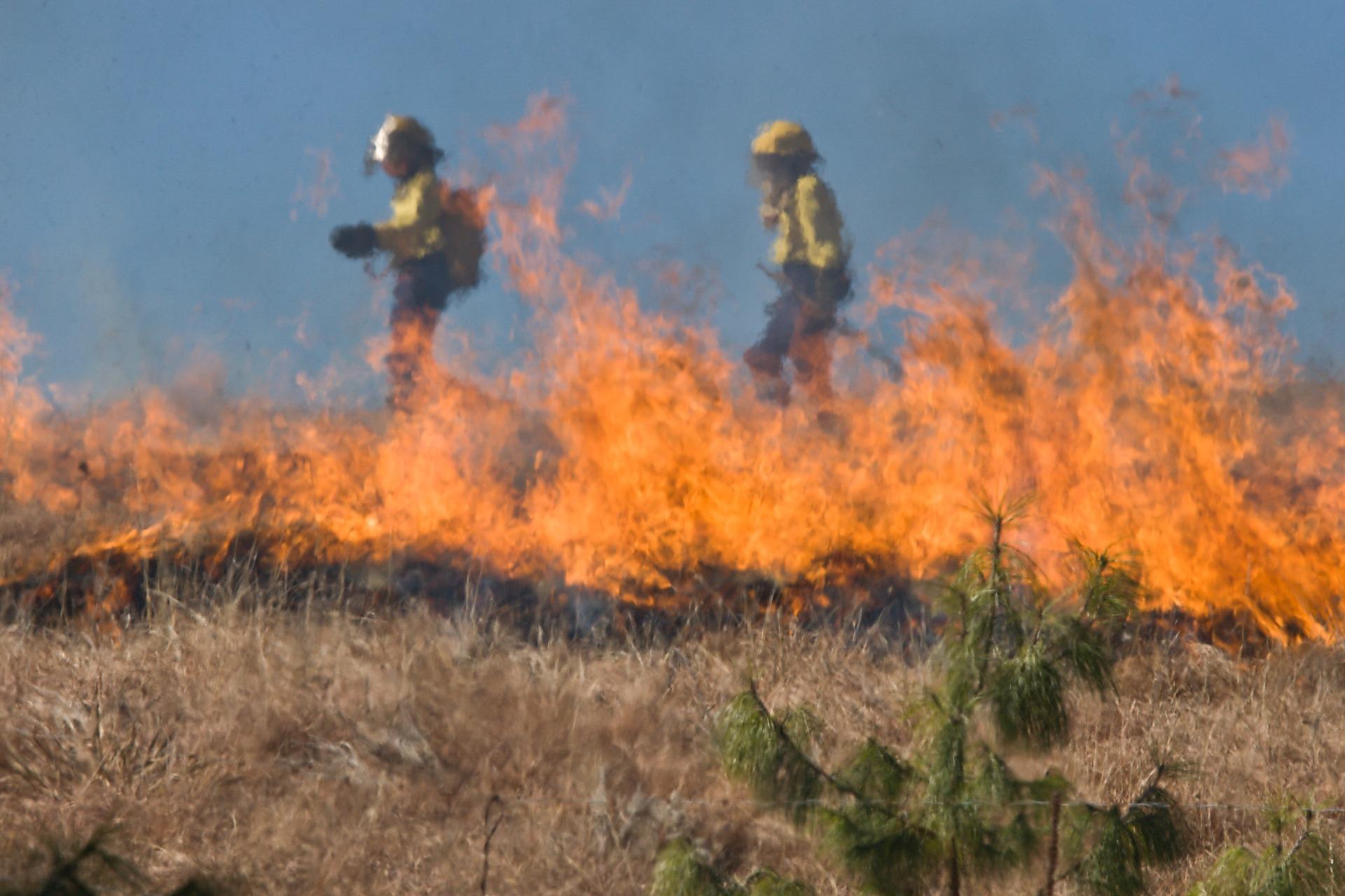 Kolejny pożar traw w powiecie kolbuszowskim - Zdjęcie główne