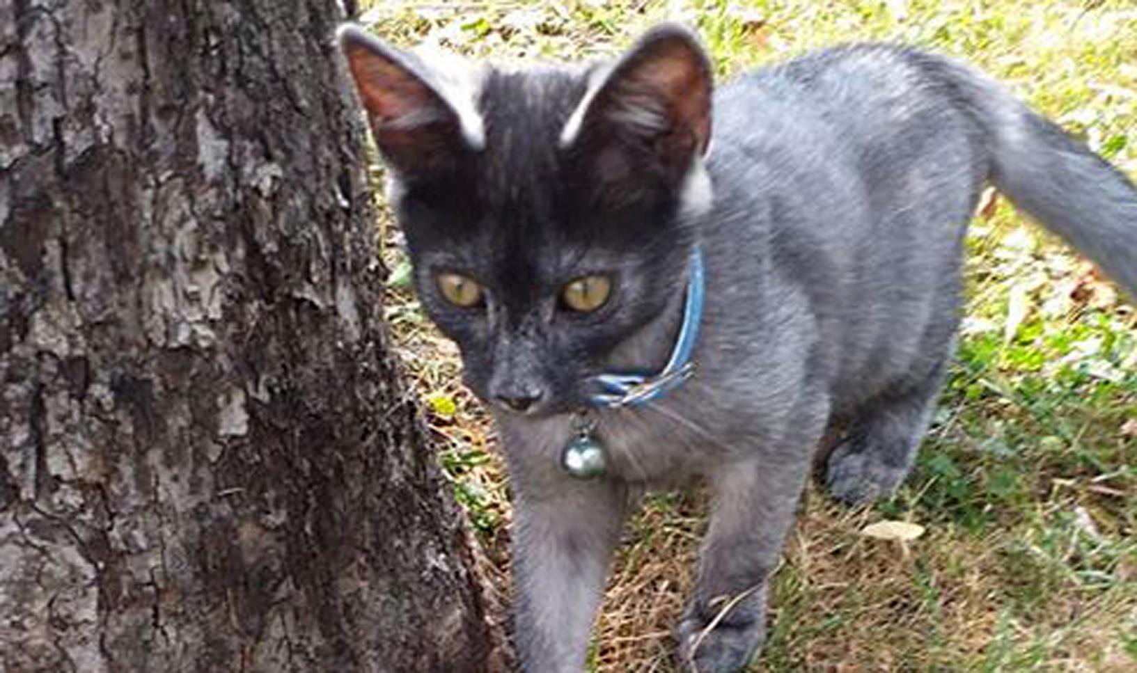 Szukamy właściciela małego kotka  AKTUALIZACJA   - Zdjęcie główne