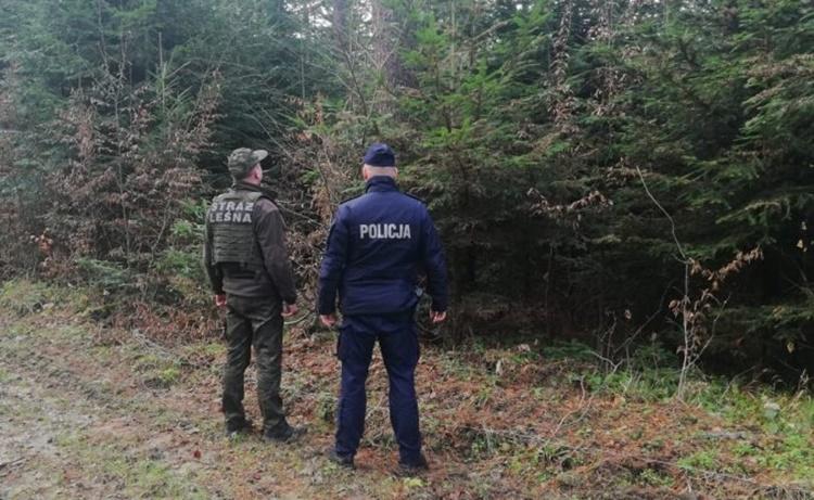 """Akcja """"Choinka"""" na Podkarpaciu. Surowe kary za kradzież drzew  - Zdjęcie główne"""