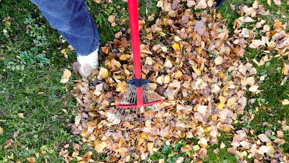 Gmina Majdan Królewski. Mieszkańcy będą mogli oddać skoszoną trawę i zeschnięte liście. Zmienił się zakres odbierania odpadów komunalnych - Zdjęcie główne