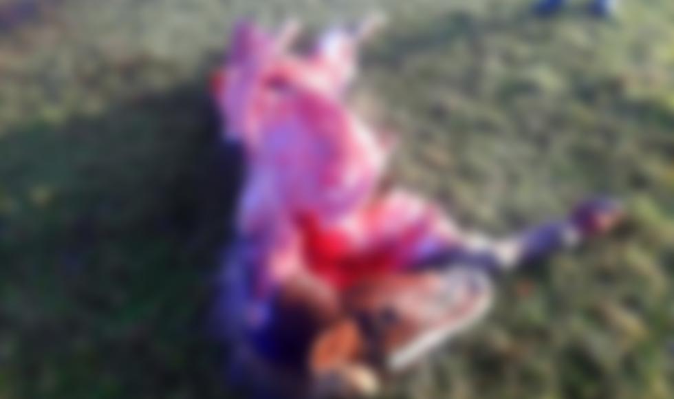 BIESZCZADY. Wataha wilków rozszarpała źrebię |UWAGA! DRASTYCZNE ZDJĘCIA| - Zdjęcie główne