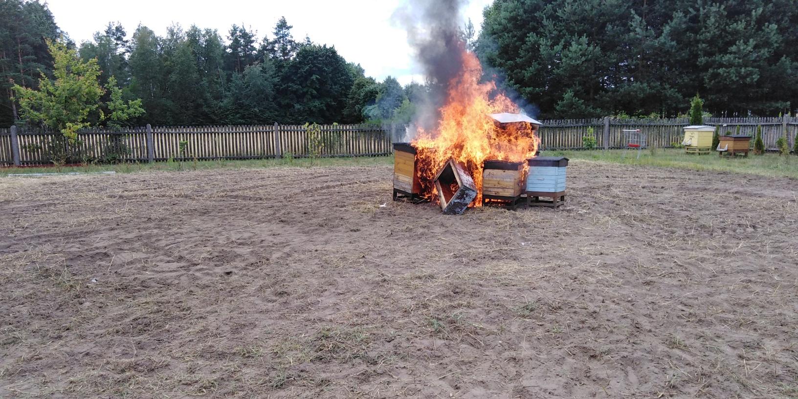 Zgnilec amerykański dotarł do Kolbuszowej. Spalono kilka uli [ZDJĘCIA] - Zdjęcie główne