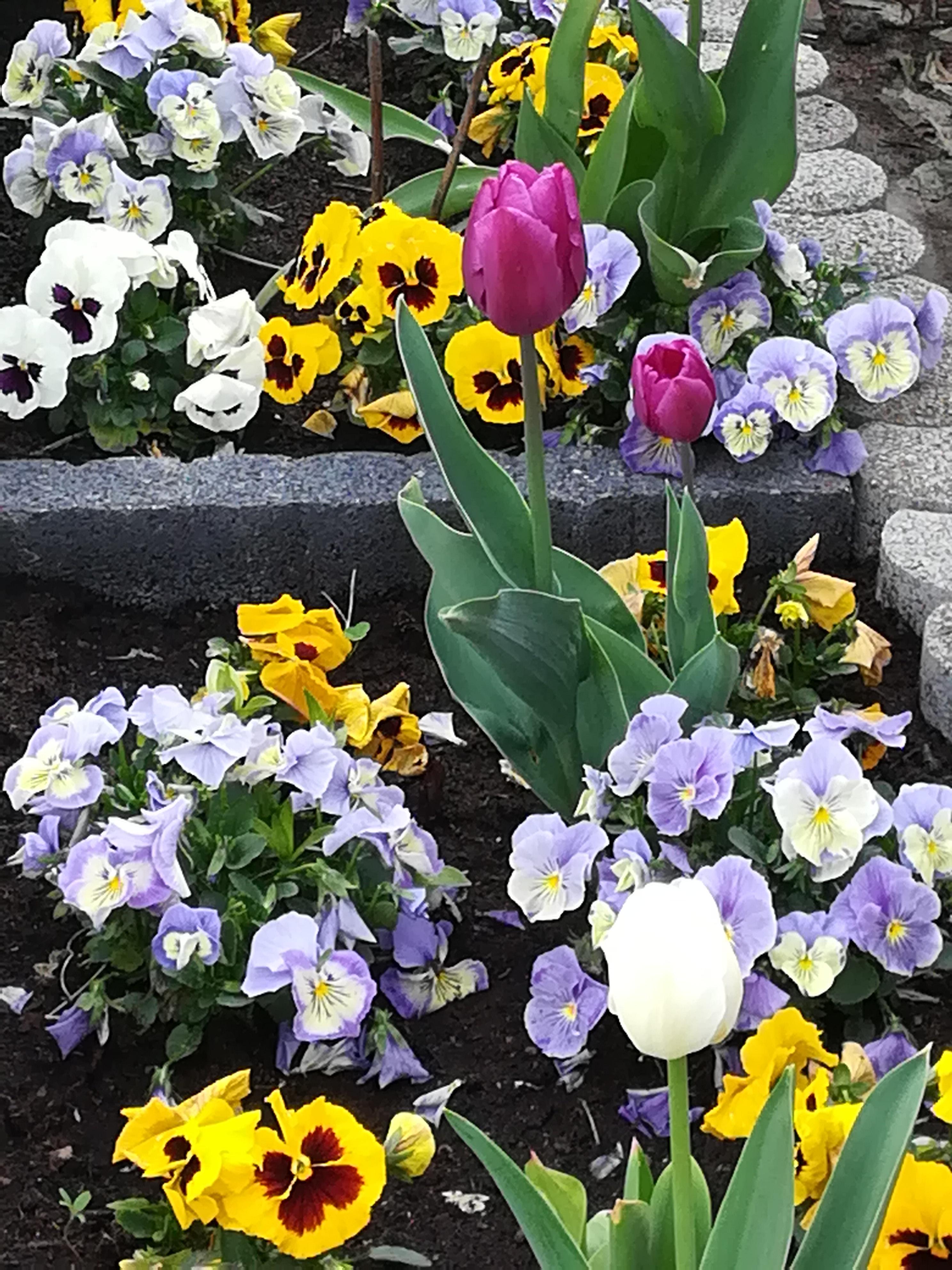 Piękne niebo, zieleń i kolorowe kwiaty - majówka w ogrodzie  - Zdjęcie główne