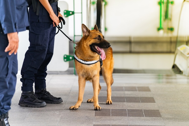 Policyjny pies pomógł znaleźć mieszkankę powiatu kolbuszowskiego, która zaginęła w sobotę - Zdjęcie główne
