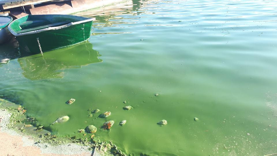 Na brzegu zalewu w Wilczej Woli mieszkańcy znaleźli mnóstwo martwych ryb, a smród wody był nie do wytrzymania - Zdjęcie główne