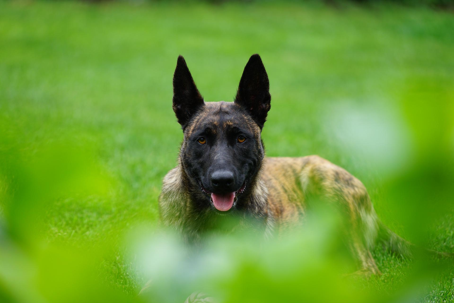 Cmolas: Pies znowu ugryzł. Właściciel usłyszał zarzuty  - Zdjęcie główne