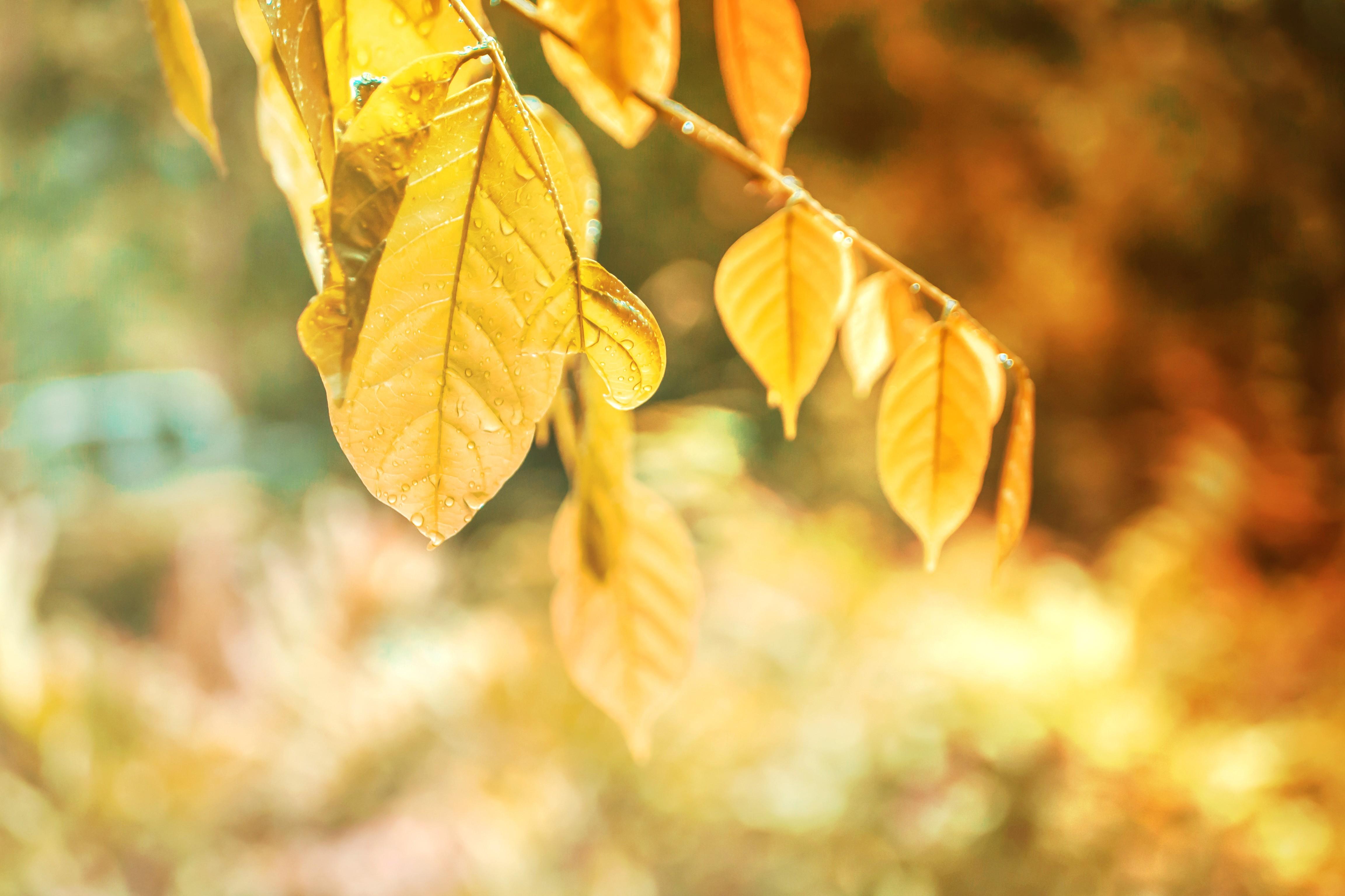 Pogoda tej jesieni dopisuje. Ciepłe promienie słońca sprzyjają porządkom na działkach i podwórkach - Zdjęcie główne