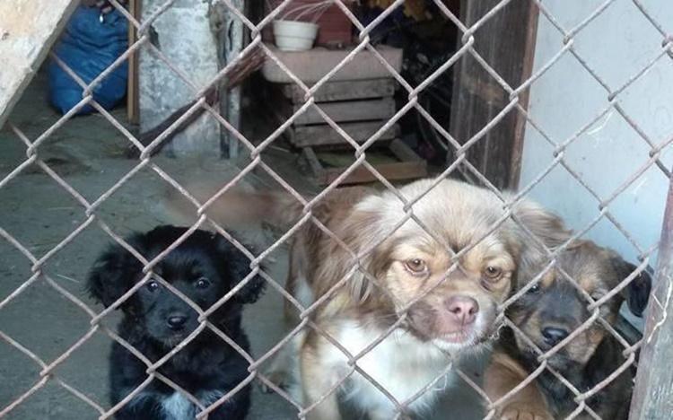 Fundacja chce zakupić ciepłe budy dla psów. Proszą o pomoc  - Zdjęcie główne