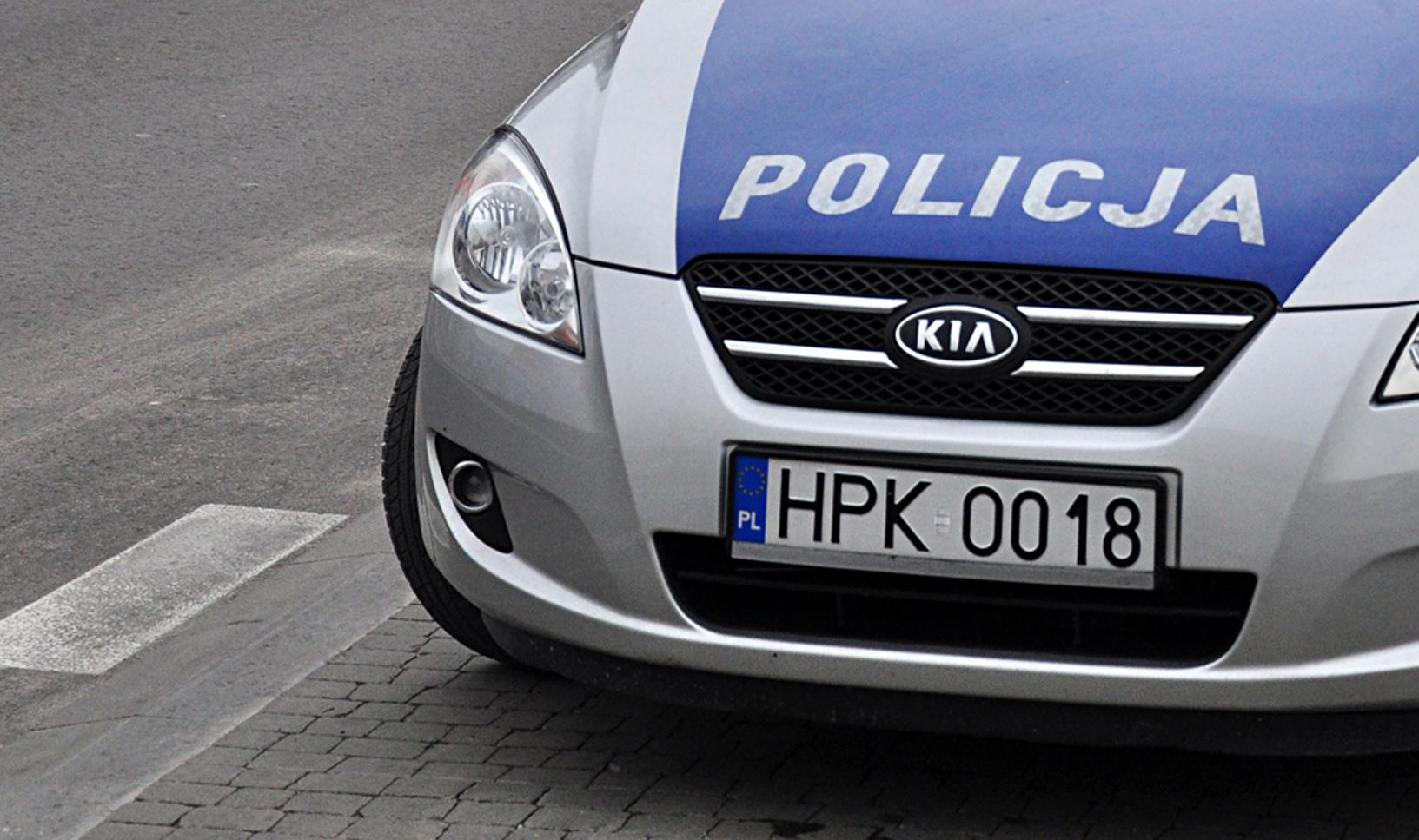 POWIAT KOLBUSZOWSKI. Sarna w policyjny radiowóz  - Zdjęcie główne