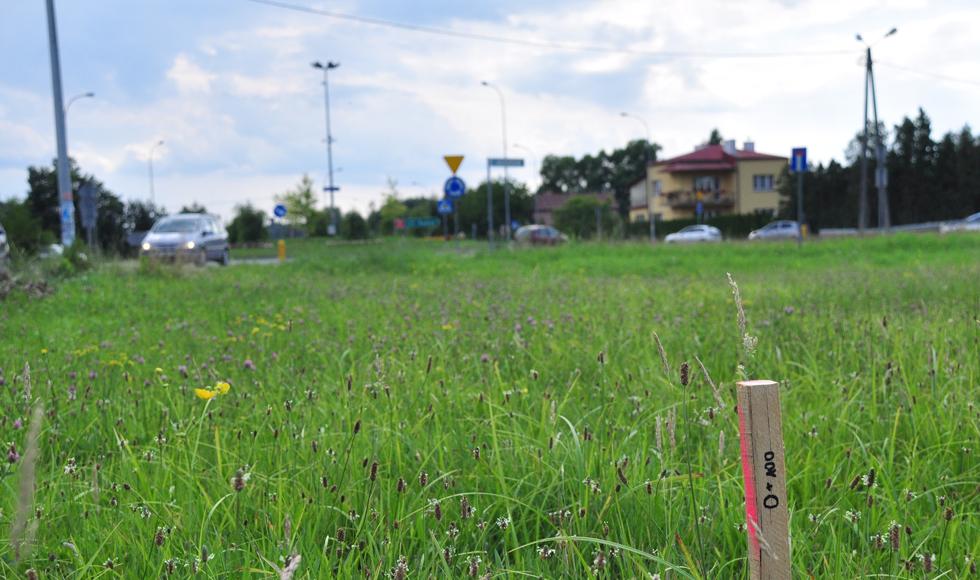 Gmina Kolbuszowa. Geodeci wytyczają trasę małej obwodnicy Kolbuszowej i Weryni. Do robót szykują się drogowcy - Zdjęcie główne