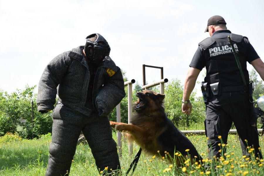 Z PODKARPACIA. Cięzka choroba przerwała jego służbę. Policyjny pies odszedł na emeryturę [FOTO] - Zdjęcie główne