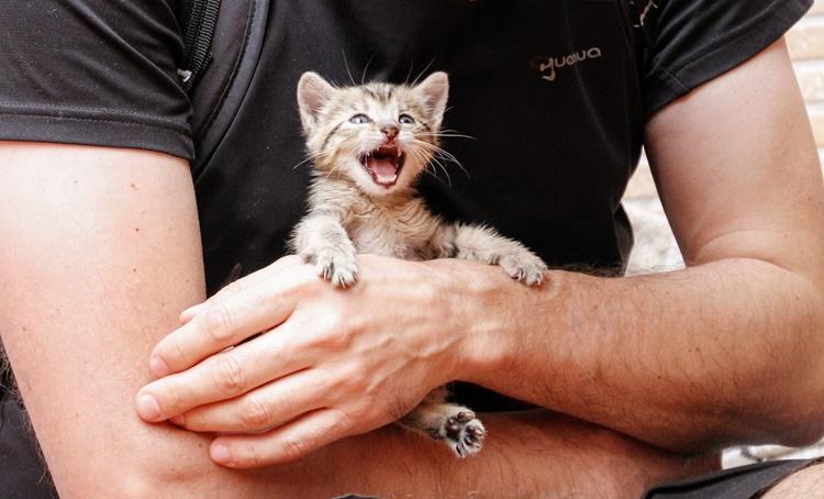 14-dniowe i bezbronne kocięta zostawione na pewną śmierć. Sprawę wyjaśnia policja  - Zdjęcie główne