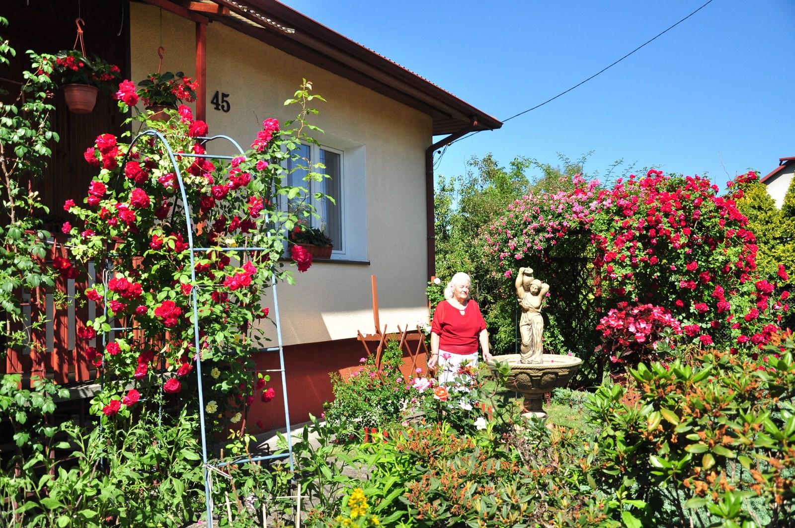 Ogród pani Kazimiery przy ul. Narutowicza w Kolbuszowej wypełnia kilkadziesiąt gatunków kwiatów. Niektóre okazy mają nawet 50 lat  - Zdjęcie główne