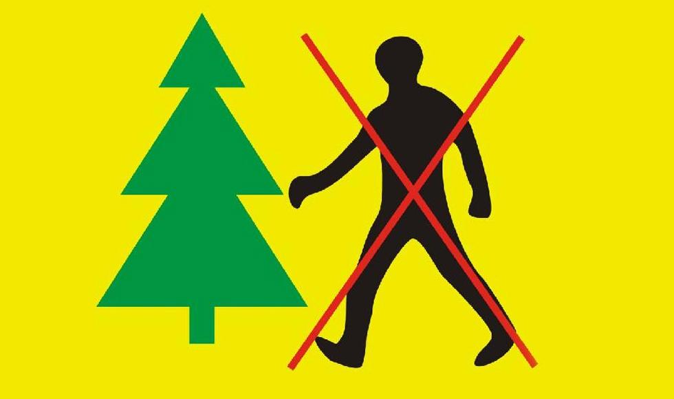 Gmina Dzikowiec. Do czwartku włącznie obowiązuje zakaz wstępu do lasu na terenie Leśnictwa Lipnica - Zdjęcie główne