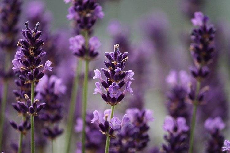 Wysiew nasion kwiatów jednorocznych - jak zrobić to dobrze? - Zdjęcie główne