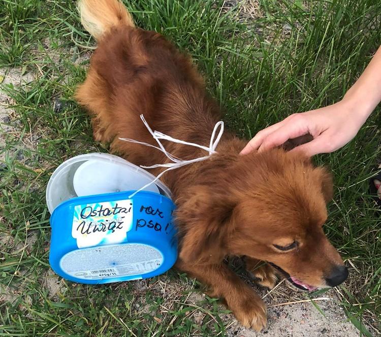 """""""Uwiąż psa! Nie żartuję"""". Pies z przywiązanymi do szyi plastikowymi pudełkami [FOTO] - Zdjęcie główne"""