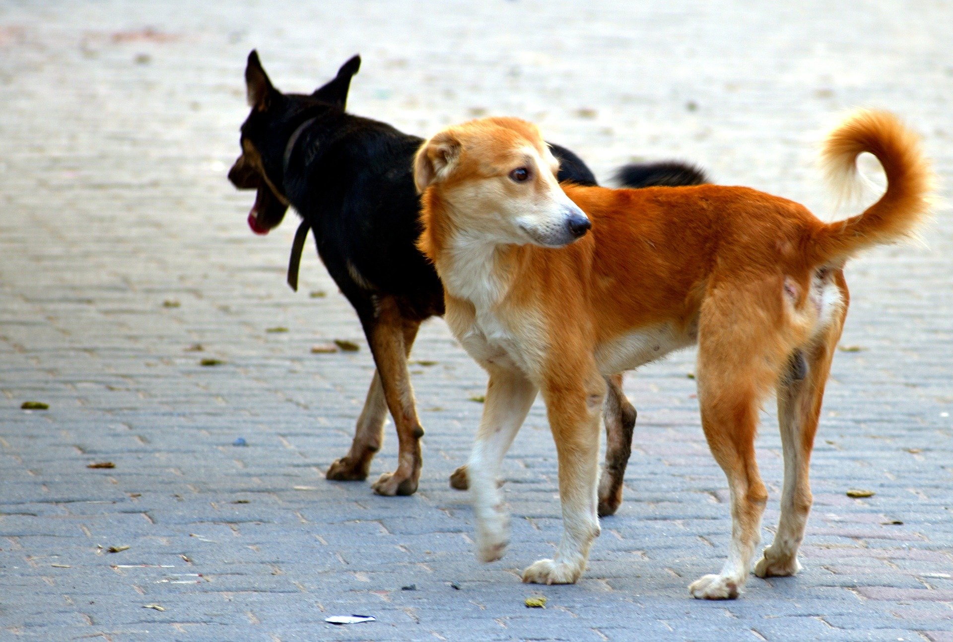 Kolbuszowska policja przyjmuje coraz więcej zgłoszeń o bezpańskich psach  - Zdjęcie główne