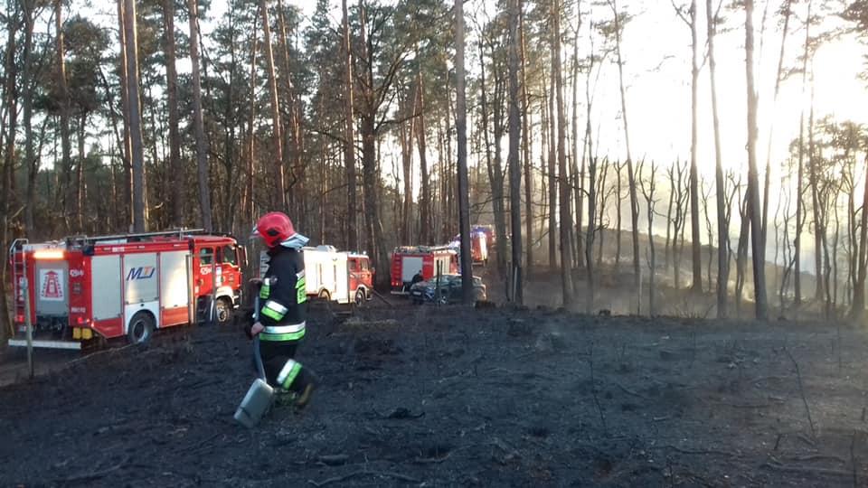 Z PODKARPACIA. W lesie wybuchł pożar. Spłonęło ponad 20 hektarów terenu [FOTO] - Zdjęcie główne