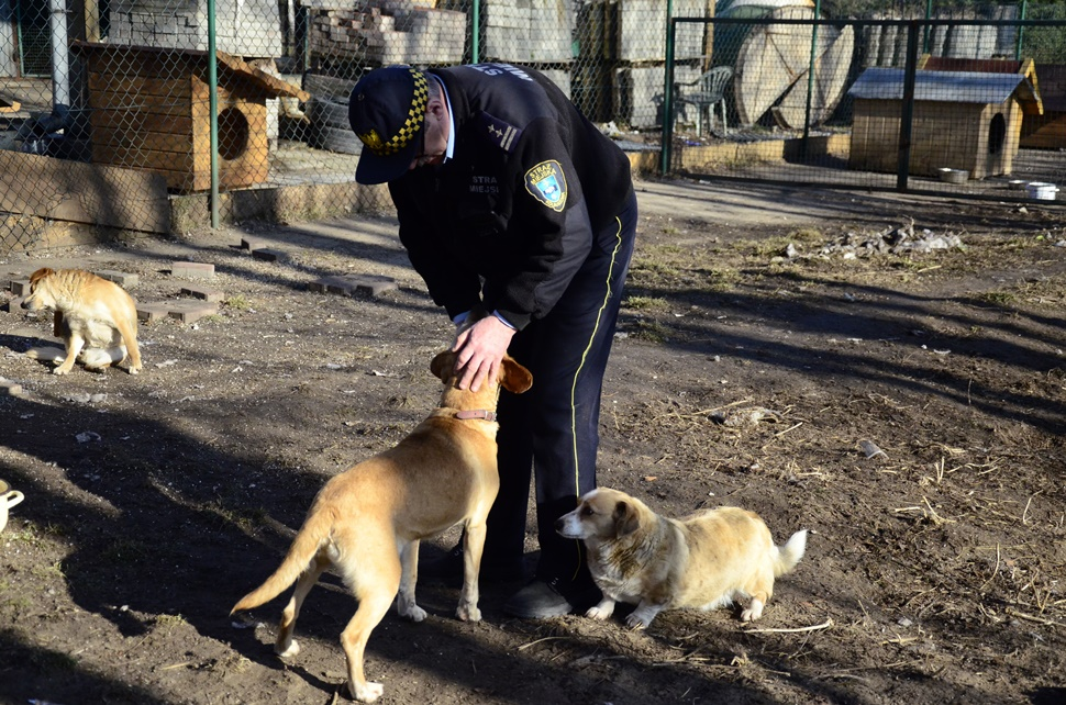 Powstanie prawdziwe schronisko dla zwierząt w Kolbuszowej Dolnej - Zdjęcie główne