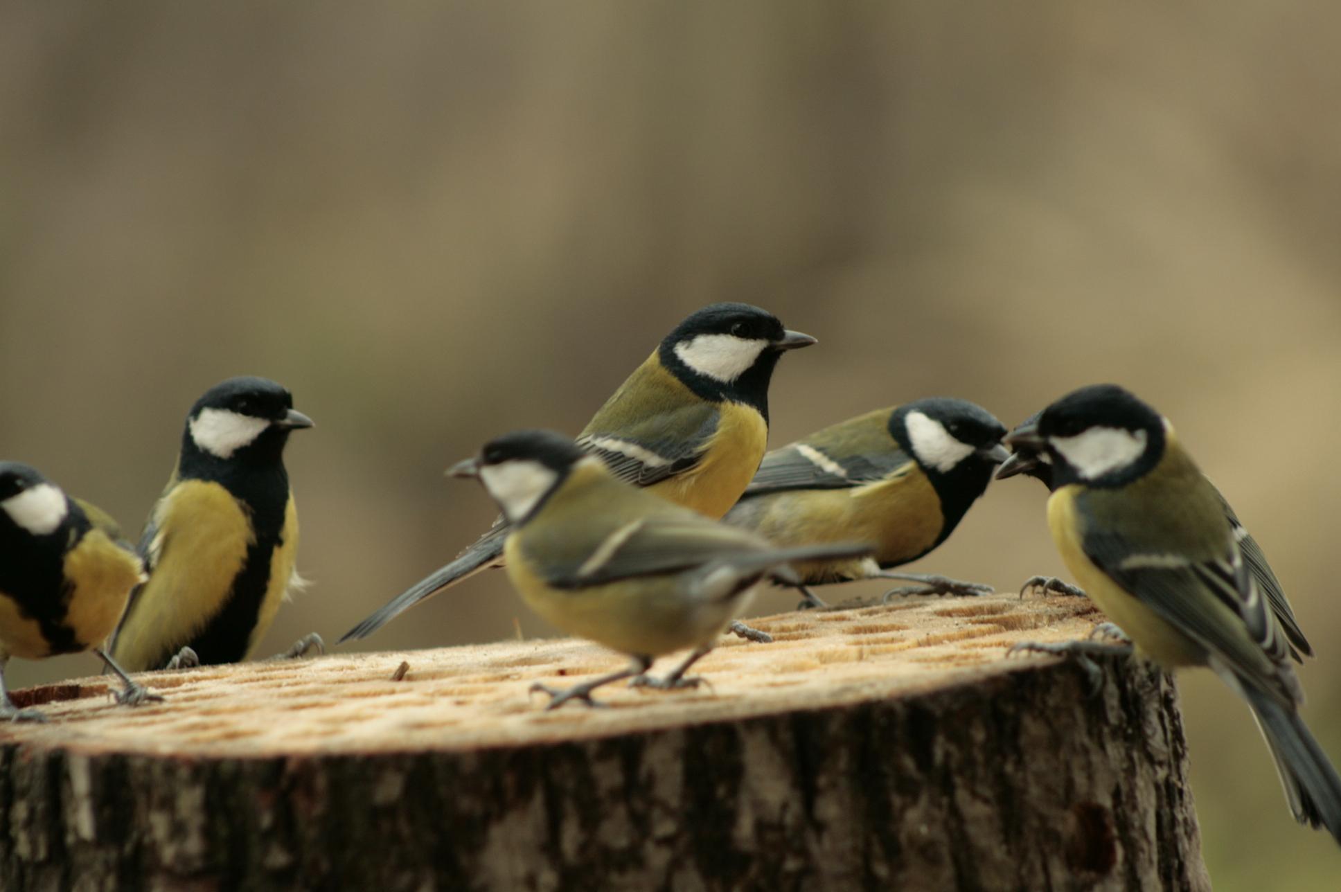 Czym karmić ptaki, żeby im nie zaszkodzić? - Zdjęcie główne