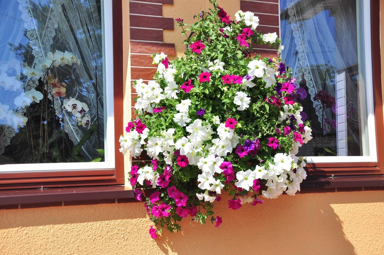 Kolbuszowa. Piękne kwiaty to powód do dumy. Pani Zofia z Kolbuszowej opowiedziała nam o swoim hobby - Zdjęcie główne