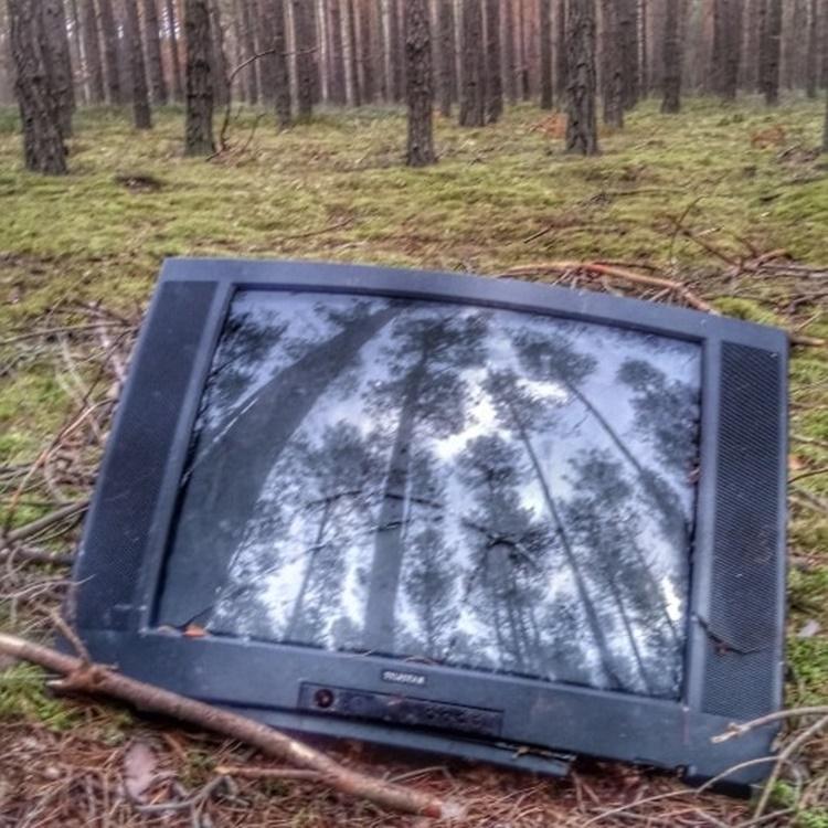 Co można znaleźć w kolbuszowskich lasach? Apel nadleśnictwa - Zdjęcie główne