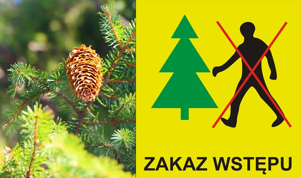 Zakaz wstępu do lasu. Na głównych drogach dojazdowych do leśnictwa Lipnica ustawione będą tablice ostrzegawcze - Zdjęcie główne