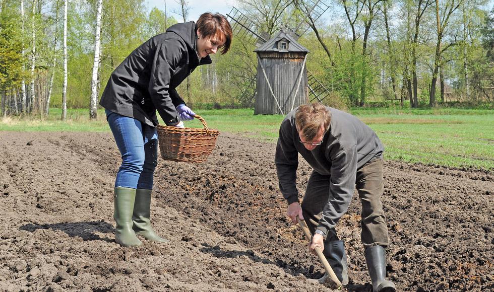 W skansenie w Kolbuszowej będą sadzić ziemniaki. Muzum zaprasza także na sianie warzyw  - Zdjęcie główne