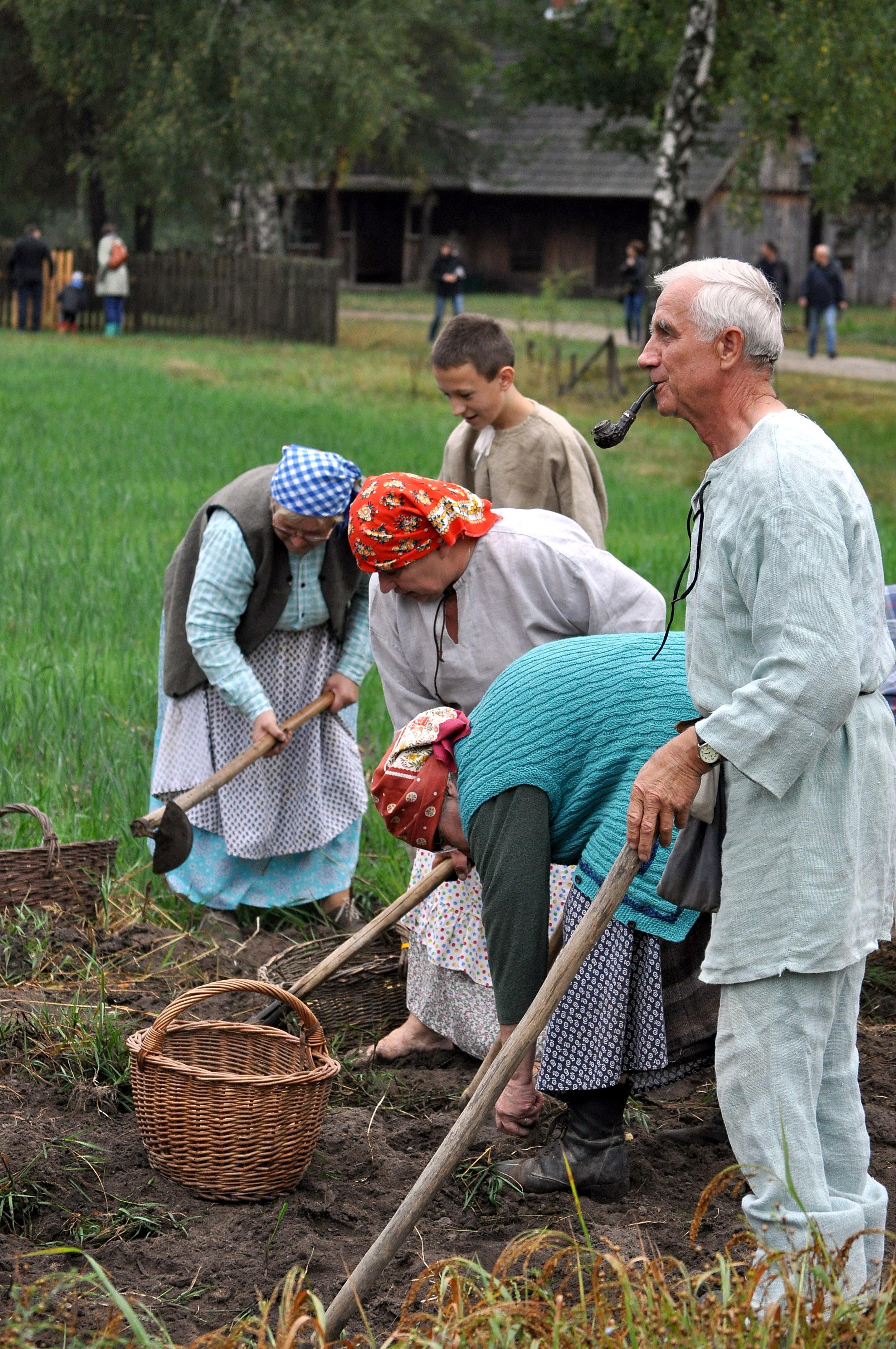 Wykopki w skansenie w Kolbuszowej, czyli muzeum zaprasza na kopanie ziemniaków  - Zdjęcie główne