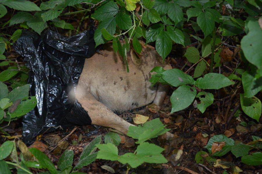 Podkarpacie. Zabił psa za nieposłuszeństwo - Zdjęcie główne