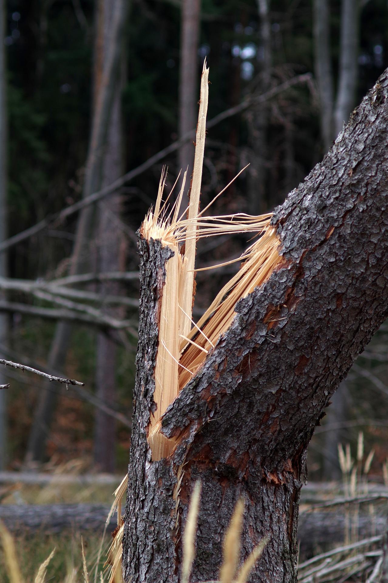 Bardzo silny wiatr wiał w nocy z niedzieli na poniedziałek na Podkarpaciu. Straż pożarna interweniowała kilkadziesiąt razy w całym województwie  - Zdjęcie główne
