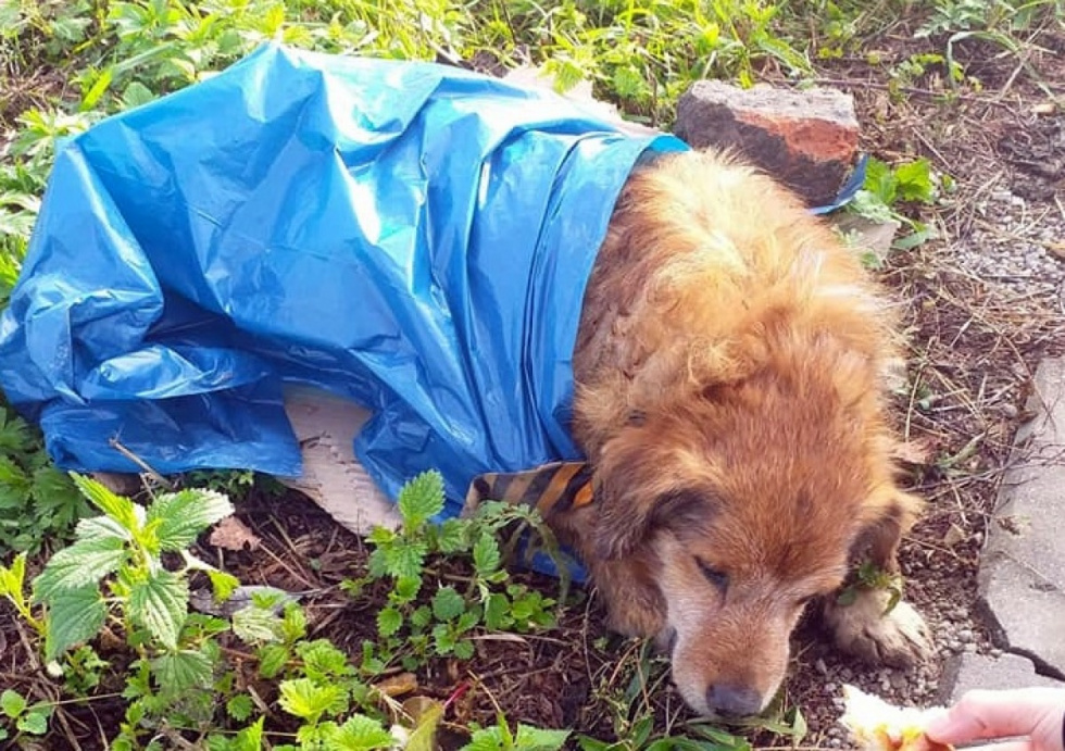 Z PODKARPACIA. Pies w worku na śmieci. Policja szuka winowajcy | ZDJĘCIA - Zdjęcie główne