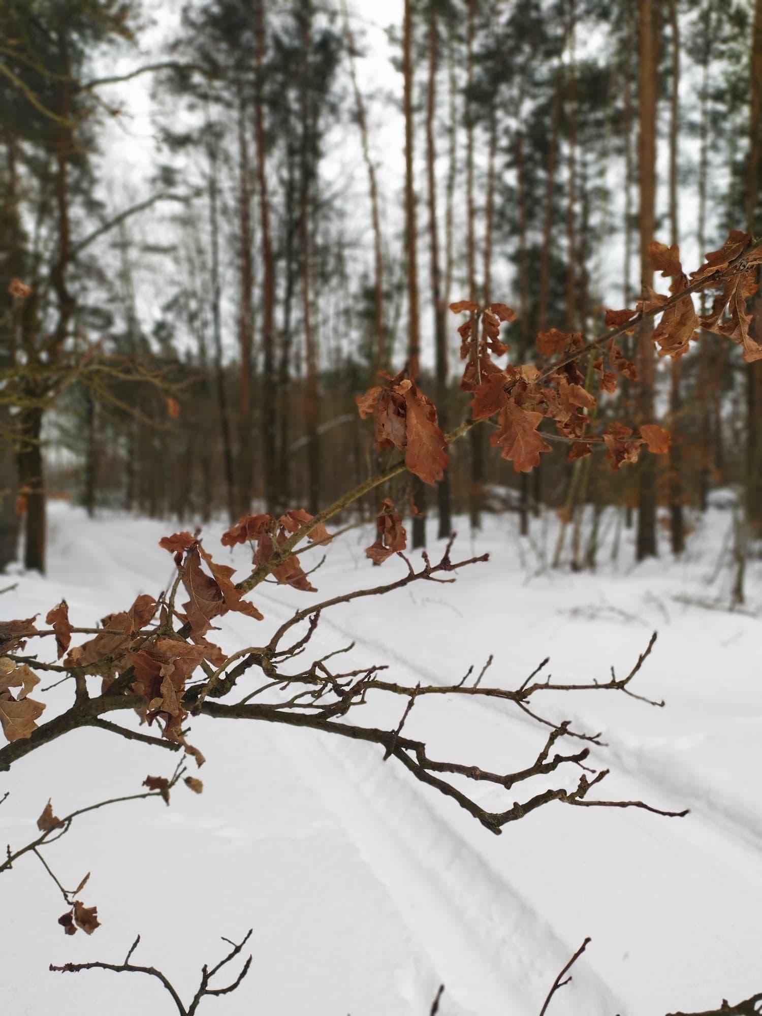 Piękny zimowy klimat w lesie [ZDJĘCIA, NAGRANIE] - Zdjęcie główne