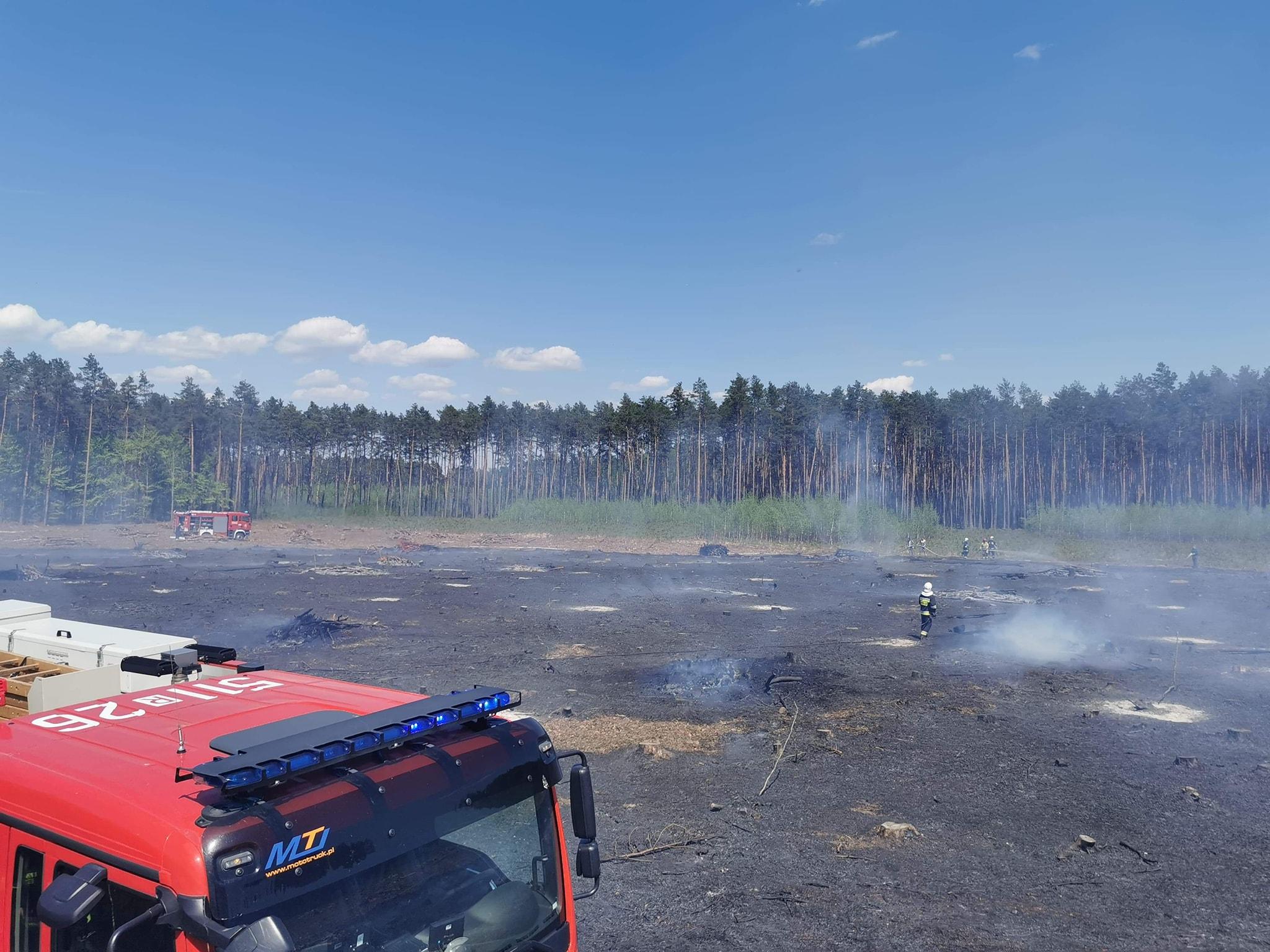 Podkarpacie: Jedna osoba zginęła w pożarze lasu! - Zdjęcie główne