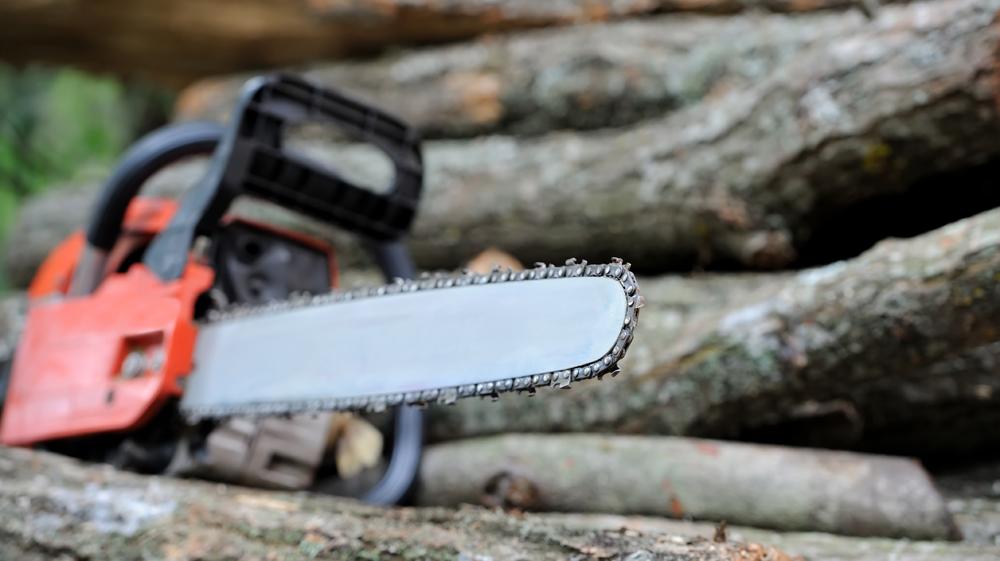 Prawie 100 drzew do ścięcia w powiecie kolbuszowskim - Zdjęcie główne