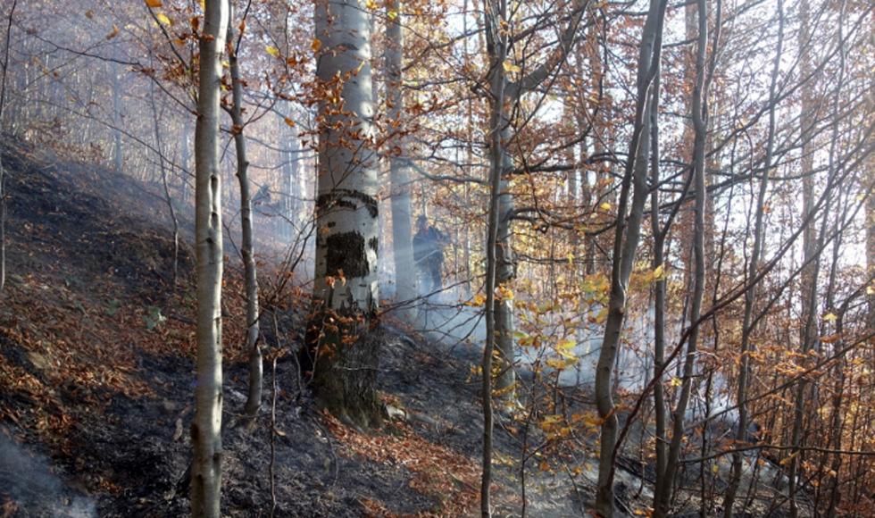 Ku przestrodze. Tak wygląda płonący las   WIDEO   - Zdjęcie główne
