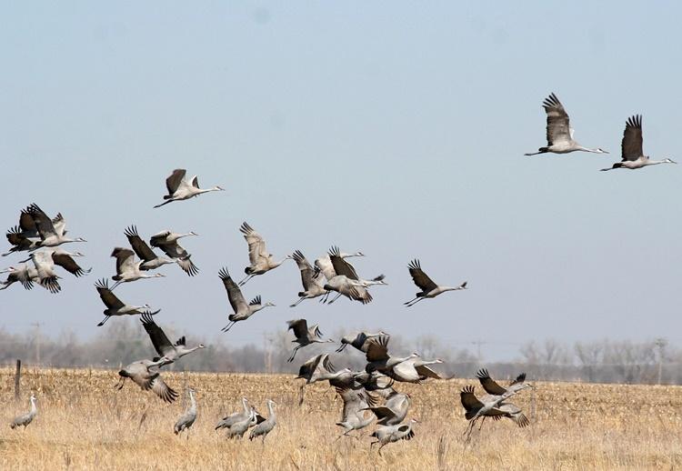 Zakażone ptaki lecą do Polski - Zdjęcie główne