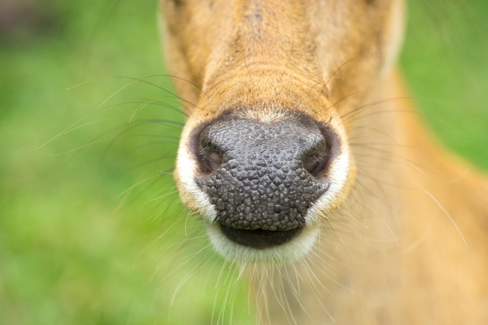 Gmina Cmolas. Szacowanie szkód wyrządzonych przez dzikie zwierzęta i problemy z uzyskaniem odszkodowania - Zdjęcie główne