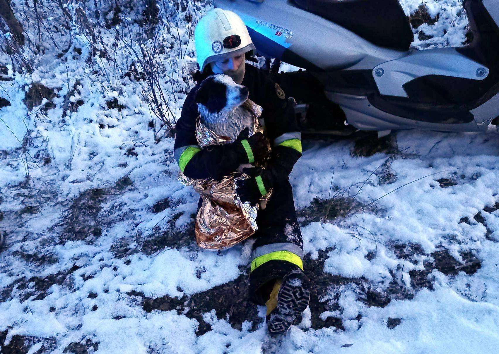Strażacy uratowali topiące się psy! - Zdjęcie główne