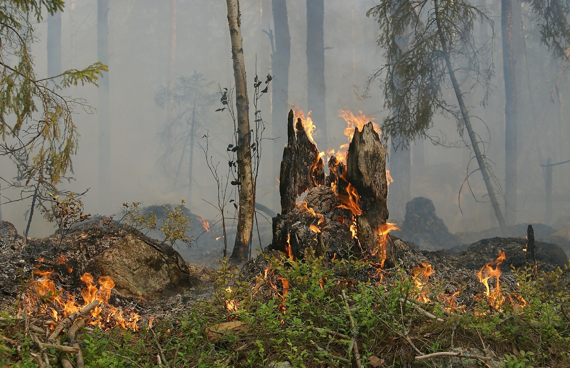 UWAGA! W Bieszczadach podwyższony stan zagrożenia pożarowego! - Zdjęcie główne