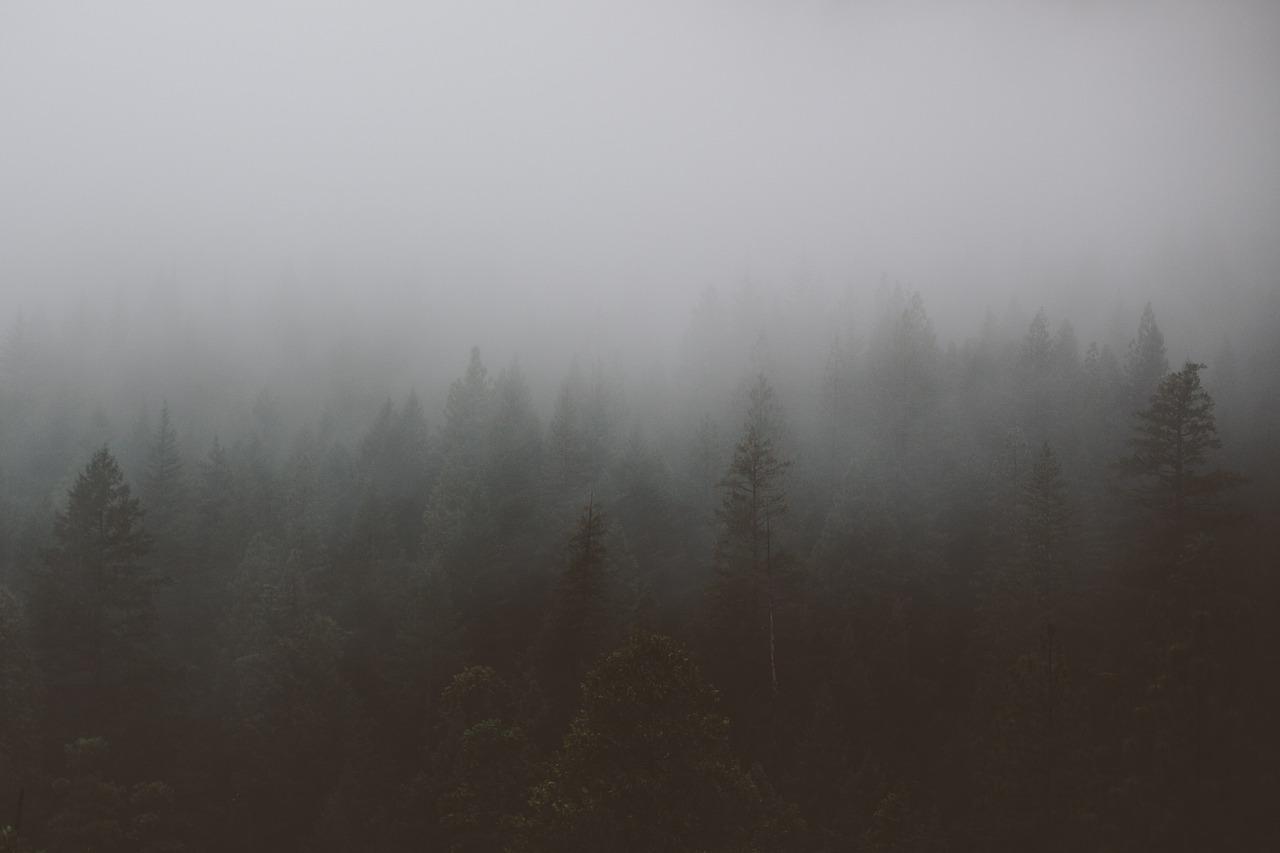 ZAGÓRZ: 53-latka zgubiła się nocą w lesie - Zdjęcie główne