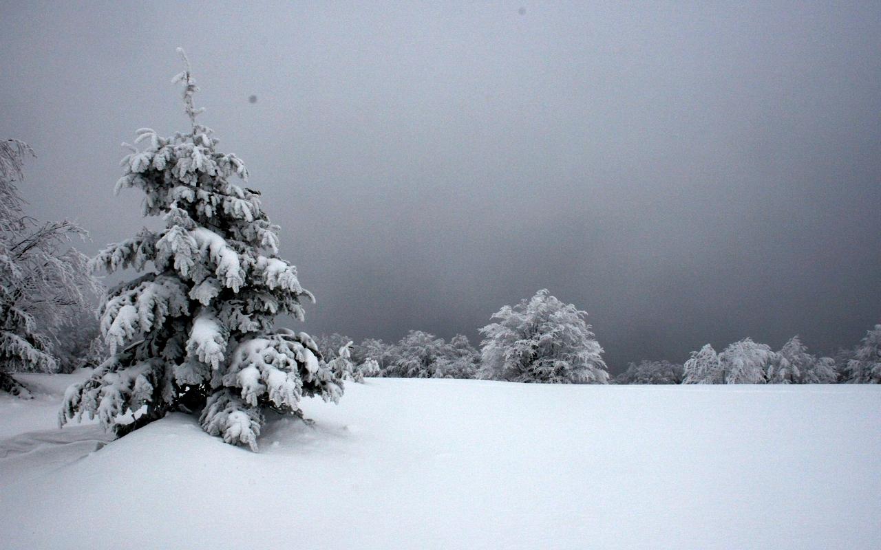 Bajkowe klimaty w Bieszczadach [FOTO] - Zdjęcie główne