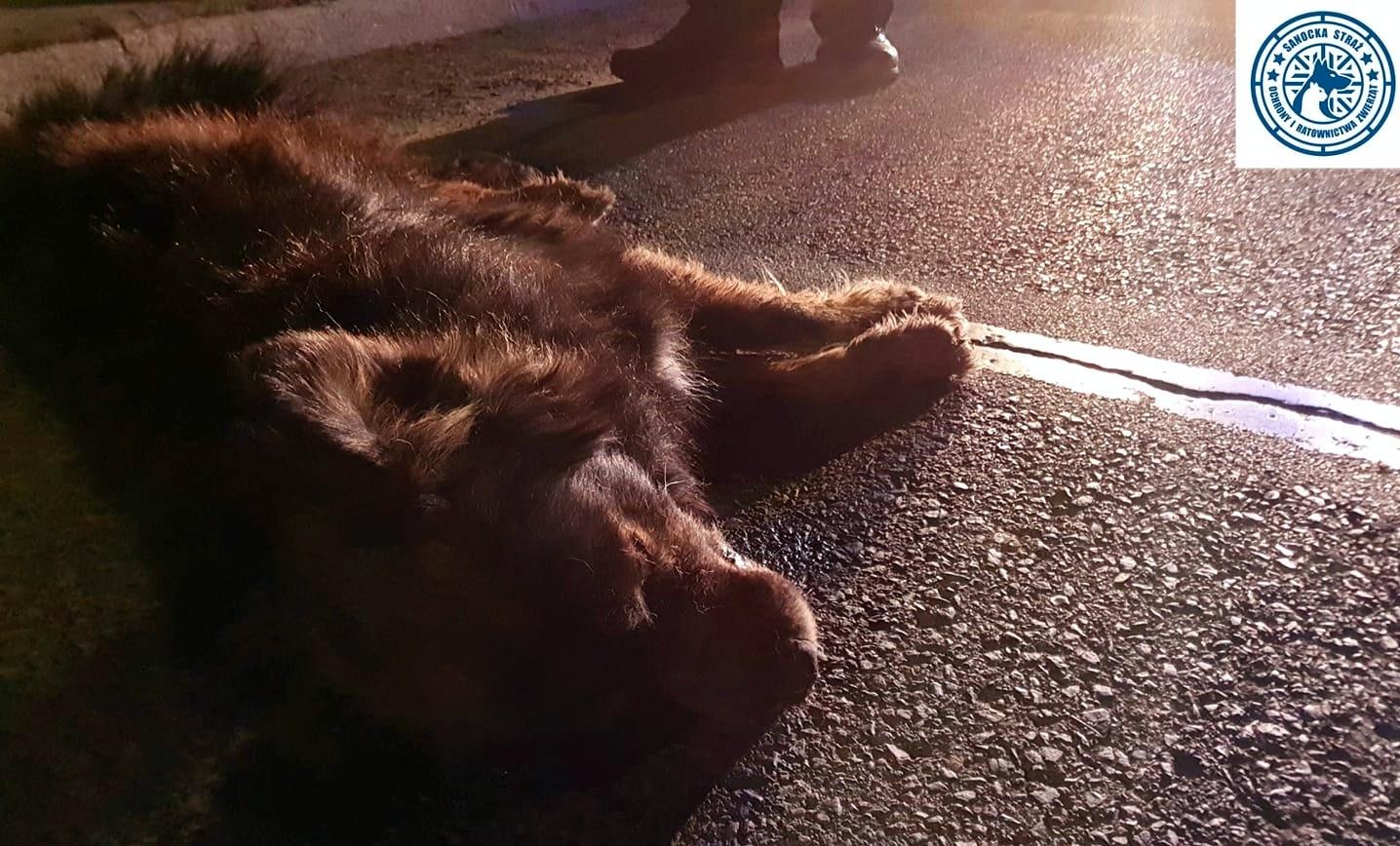 SIENIAWA: Potrącił psa i uciekł z miejsca zdarzenia. Zwierzę konało w męczarniach ponad godzinę! - Zdjęcie główne