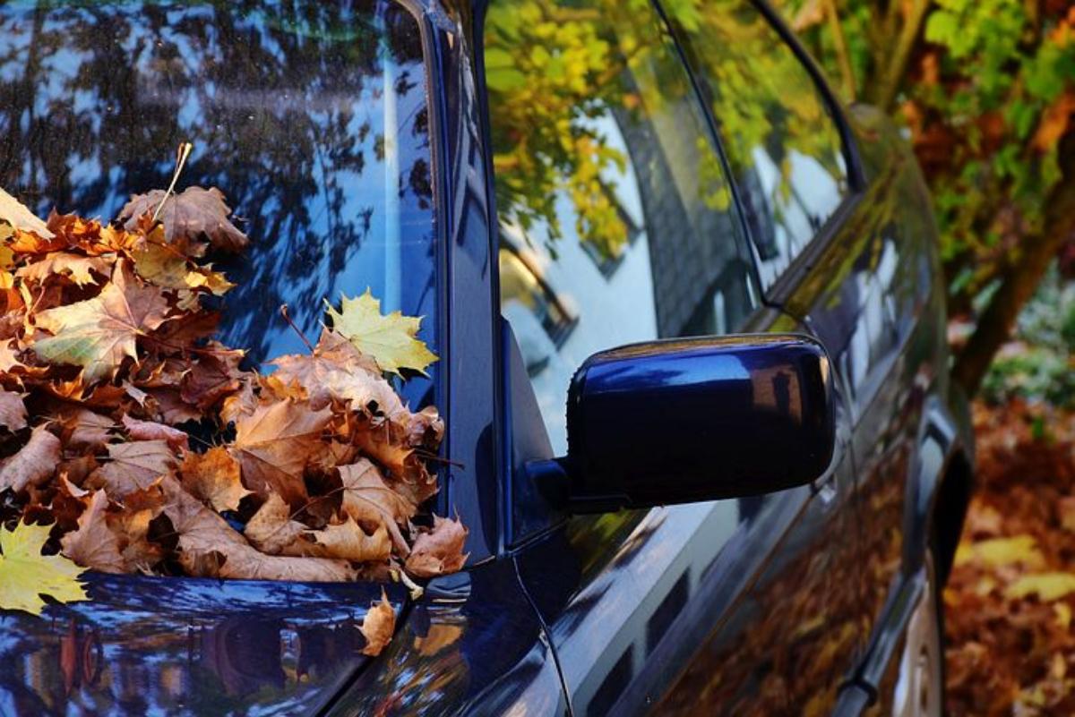 Podkarpacie. Jesienią zachowaj ostrożność na drodze! - Zdjęcie główne