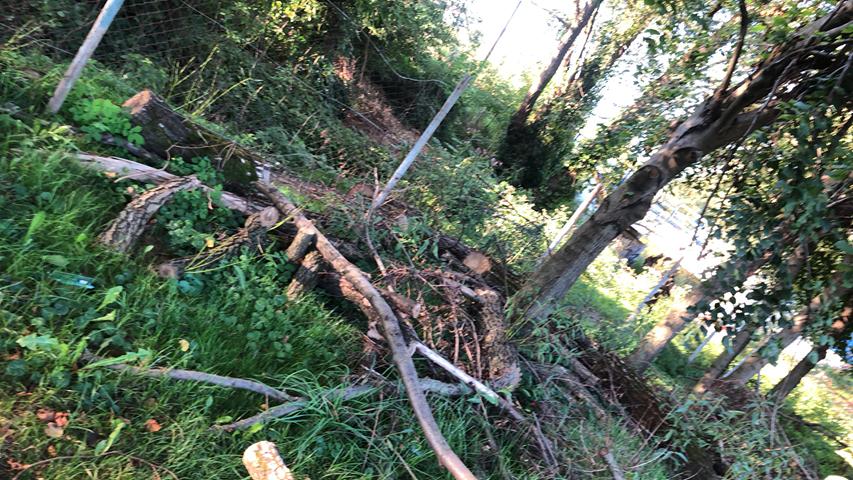 Sygnały czytelników. Ścięte 3 miesiące temu drzewa leżą na placu zabaw [FOTO] - Zdjęcie główne