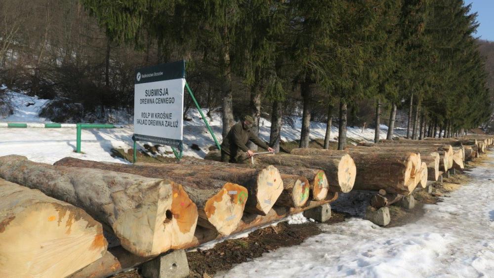 Cenne drewno z naszych lasów poszło w świat! - Zdjęcie główne