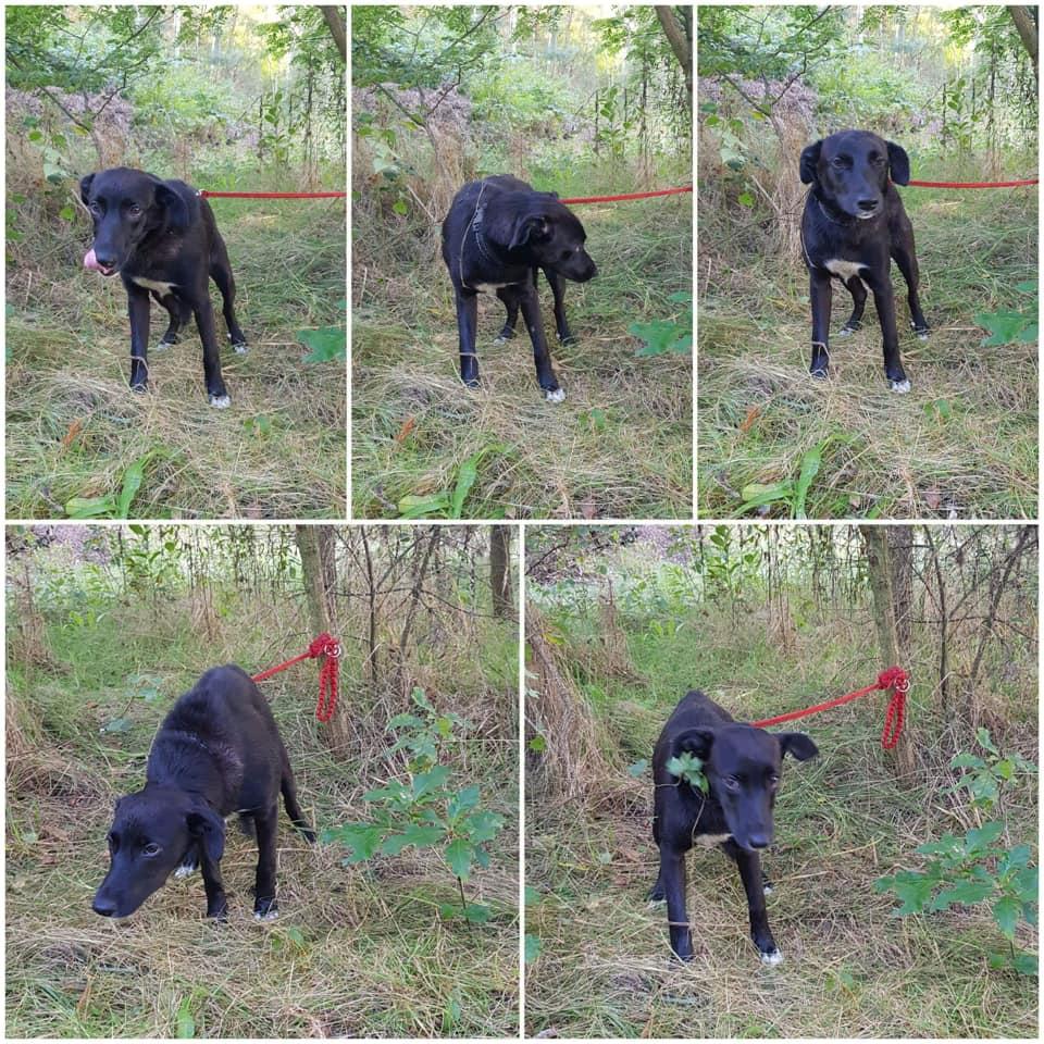 Podkarpacie. Przywiązali małego psa do drzewa w środku lasu! [FOTO] - Zdjęcie główne